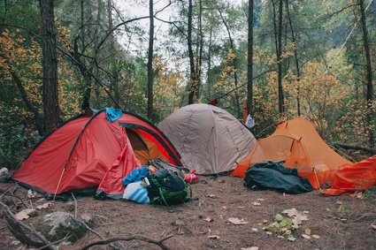 Large 6 Person Tents in a Forest Campsite.